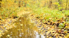 Leaves floating down a creek in the autumn forest Stock Footage