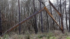 Collapsed broken tree trunk in the forest, Germany Stock Footage