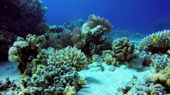 Reef and beautiful fish. Underwater life in the ocean. Stock Footage