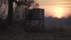 Bird lookout at sunrise Stock Footage