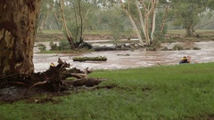 Two Men Swimming In The Dangerous Flooded Todd River In Alice Springs Stock Footage