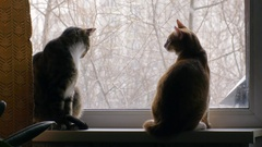 Two cats fighting on the windowsill Stock Footage