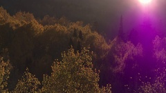 Aerial view of Fall color over colorful forest in the Utah mountains. Stock Footage