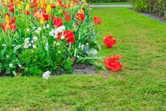 Anemone and daffodils lane Stock Photos