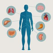 Human body with internal organs Stock Illustration