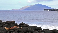 Galapagos sea lions resting on rocks at Chinese Hat island in Galapagos, Ecuador Stock Footage