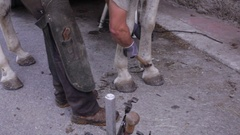 Horse farrier working on white horse Stock Footage