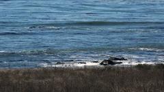 4K UHD CA coastline meets Pacific ocean with subtle waves Stock Footage