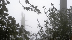 A dead tree in the fog, framed by branches of other trees Stock Footage