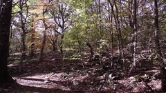 Panoramic in the Slovenian woodland Stock Footage