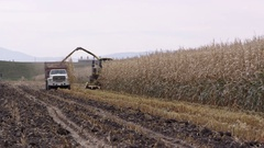 Combine and truck driving down rows of corn Stock Footage