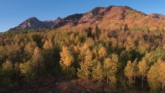 Aerial view of Fall color over forest Stock Footage