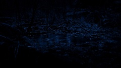 Rain Hitting Pool In The Forest At Night Stock Footage
