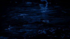 Shallow Forest Pool In Rainfall At Night Stock Footage
