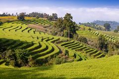 Green terraced rice field at Ban Pa Bong Peay in Chiangmai, Thailand Stock Photos