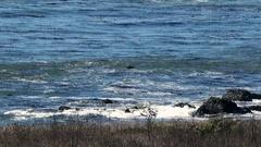 CA coastline meets Pacific ocean with subtle waves tight Stock Footage