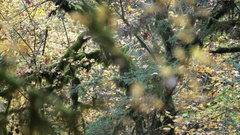 Pan left of mossy tree Stock Footage