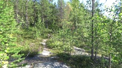 The trail is in the polar forest Stock Footage