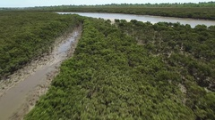 Fast forward flight low above mangroves and shallow creek rising high Stock Footage