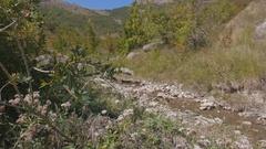 A brook runs through the mountains. Crimea. Zelenogorie. Stock Footage