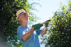 Senior man trimming plants with pruning shears Stock Photos