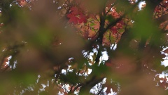 Looking through leaves in Fall moving on a slider Stock Footage
