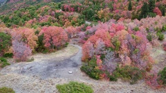 Aerial view of a forest of colorful fall trees and a road Stock Footage