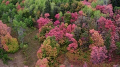 Aerial view flying over trees on a mountain showing colorful trees Stock Footage