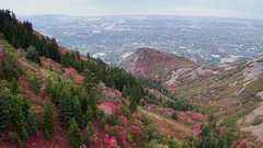 Aerial view of colorful foliage on hill side above city Stock Footage