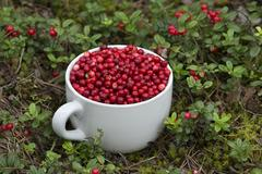 Mug full of Cowberries Stock Photos