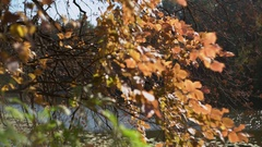 Paysage in september branch over water Stock Footage