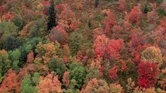 Aerial view of fall leaves on a mountain Stock Footage