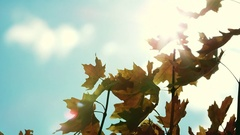 Leaves blowing in the breeze against the sky Stock Footage