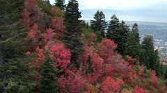 Aerial view flying over trees on hillside showing colorful trees Stock Footage