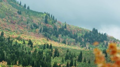 Zoomed panning view of colorful mountain side during Fall Stock Footage