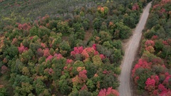 Aerial view of a winding road with trees in fall Stock Footage