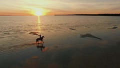 Aerial Shot of a Girl on a Horse Galloping along the Beach. Stock Footage
