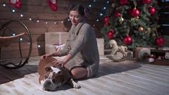 A young woman petting funny bulldog at xmas eve Stock Footage