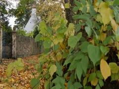 Autumn Leaves & Cottage at Teversal, Nottinghamshire Stock Footage