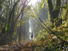 Autumn Leaves & Teversal Trail, Nottinghamshire Stock Footage