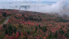 Aerial view of colorful foliage on cloudy day Stock Footage