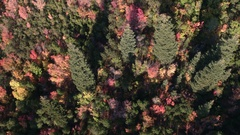 Aerial panning view looking down at colorful foliage Stock Footage