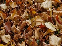 Autumn Leaves, Derbyshire Stock Footage