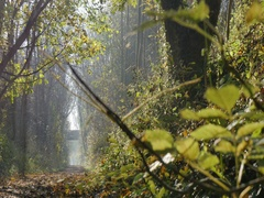 Autumn Leaves & Teversal Trail, Nottinghamshire Stock Footage