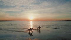 Two Girls are Riding Horses on a Beach. Horses Race on Water. Beautiful Sunset. Stock Footage