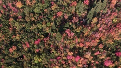 Aerial view looking down and colorful foliage during Fall Stock Footage