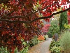 Autumn Leaves, & Church, Grasser, Cumbria Stock Footage