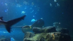 Sharks and Fish in Large Aquarium Stock Footage