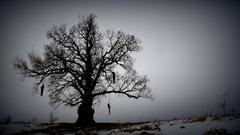 Hangman tree gloomy Stock Footage