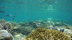Coral reef with shoal of fish Pacific ocean Stock Footage